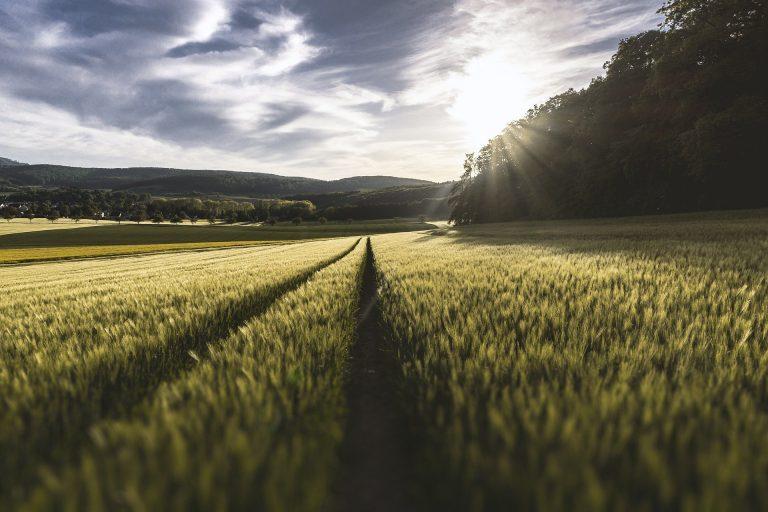 Conferenza UE sulle prospettive agricole 2020