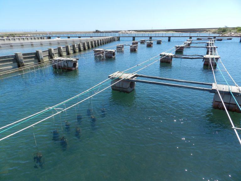 Approvazione proposta di legge proroga concessioni pesca e acquacoltura al 2033