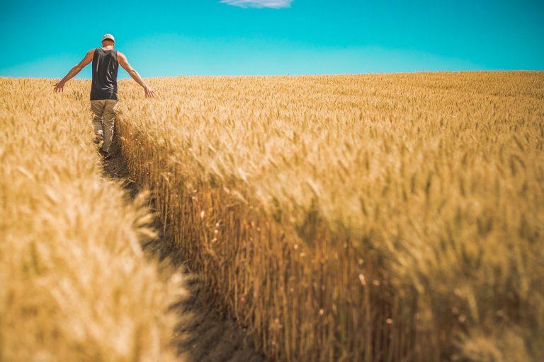 Conversione in legge decreto ristori. Misure settore agricolo e agroalimentare
