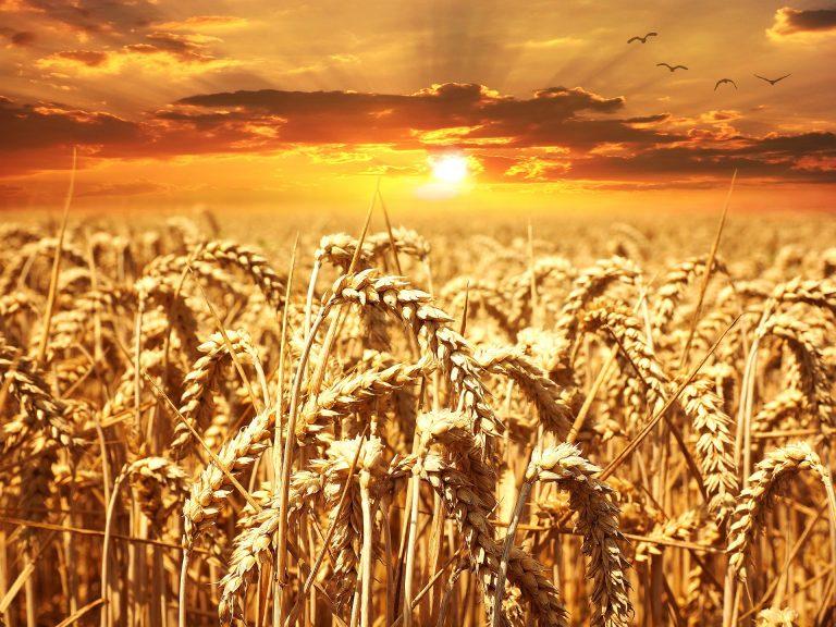 Alleanza Cooperative Agroalimentari su mancato accordo riforma PAC