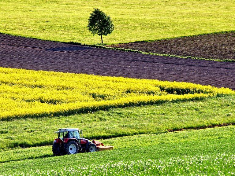 Bando ISMEA finanziamento progetti settore agroalimentare